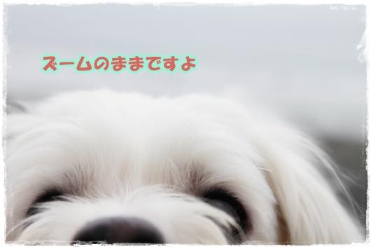 IMG_7090-1_20101011144112.jpg