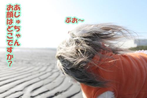IMG_8779_20110305171603.jpg