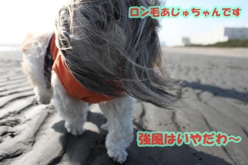 IMG_8781.jpg