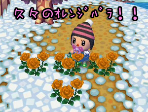 RUU_0091_20090126202425.jpg