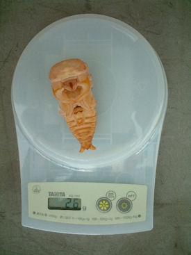 09インドAL-01蛹化体重