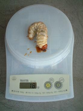 10ミャンマー 04体重