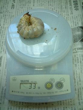 10インドBL88-B03 体重①