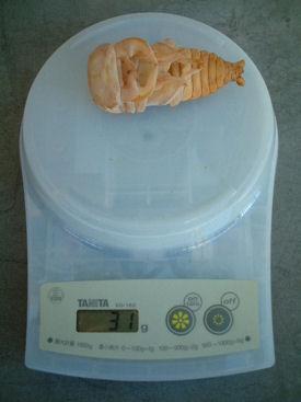 10インド SBL-07 蛹化体重