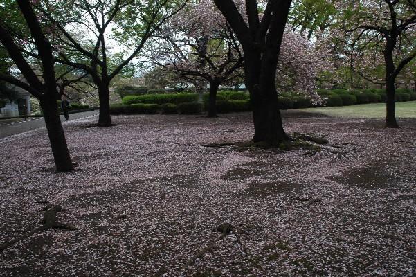 新宿御苑3