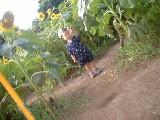 ひまわり畑4