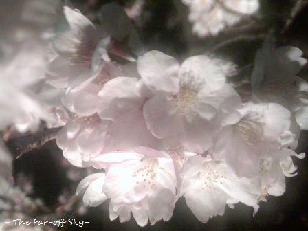 2010-04-08-03.jpg