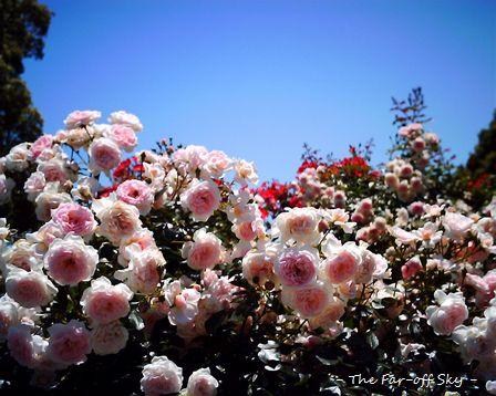 2010-06-09-01.jpg