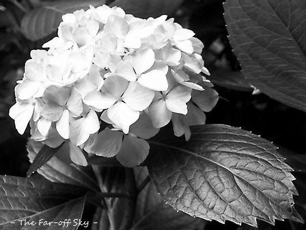 2010-06-13-02.jpg