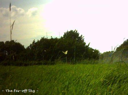 2010-07-02-02.jpg