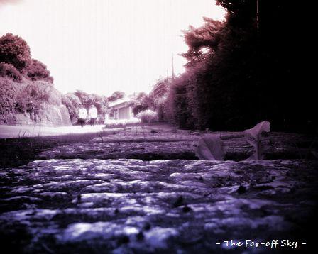 2010-07-02.jpg