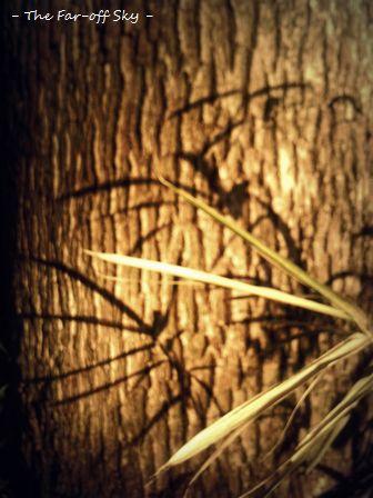 2010-11-17-01.jpg