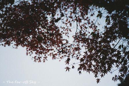 2010-12-01-03.jpg