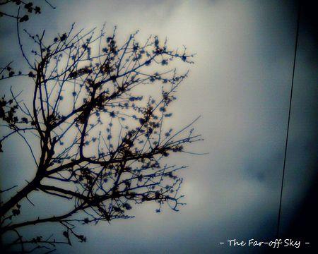 2011-03-02-01.jpg