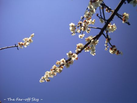 2011-03-12-02.jpg