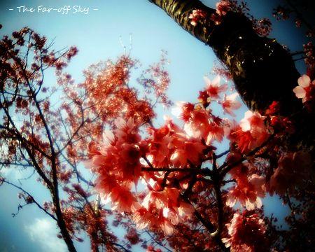 2011-03-23-01.jpg