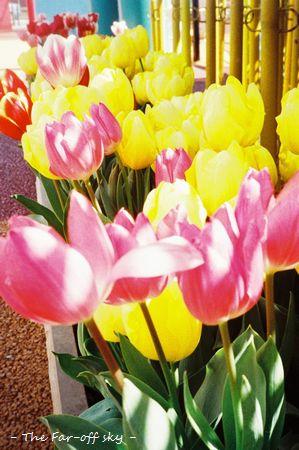 2011-03-27-03.jpg