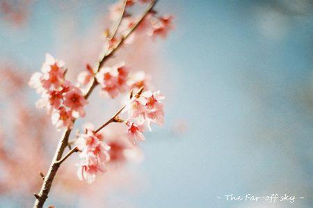 2011-03-29-01.jpg