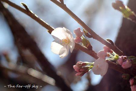2011-04-01-02.jpg