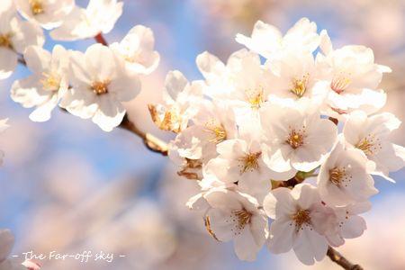2011-04-05-01.jpg