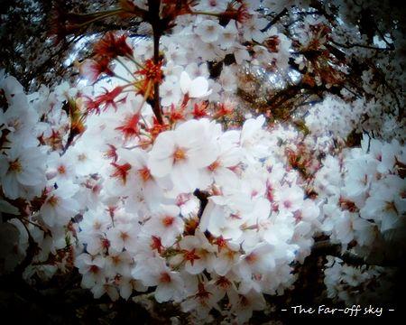 2011-04-15-01.jpg