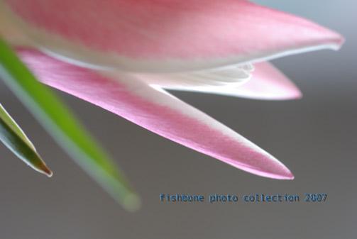 flower-p2.jpg