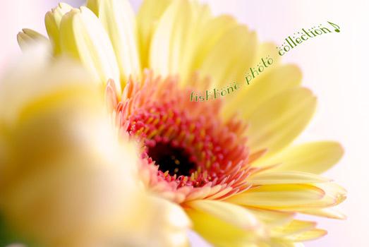 flower-y1.jpg