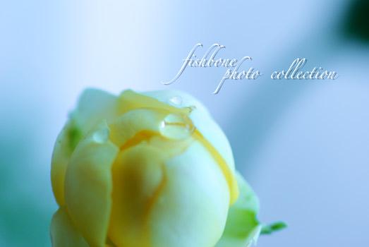flower-y2.jpg