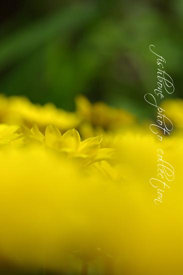 yellow カーペット