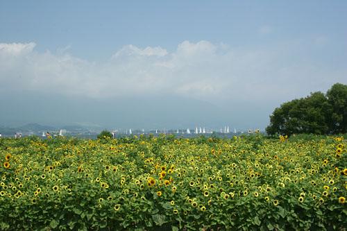 biwako200507188010.jpg