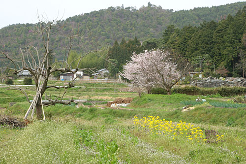 hirosawa0604097913.jpg