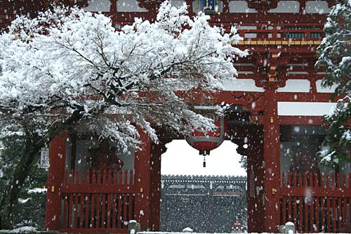 雪の宝塔寺仁王門
