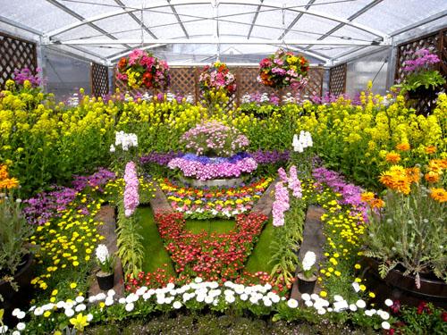 京都府立植物園ハウス花壇
