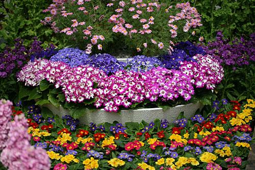 花回廊花壇2