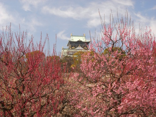 大阪城梅林2008年3月9日