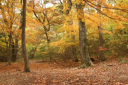 どんぐり林1
