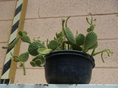 CIMAV_cactus.jpg