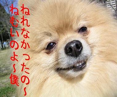 2004.11.20上坂部公園 242