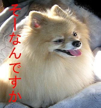 2004.11.20上坂部公園 267