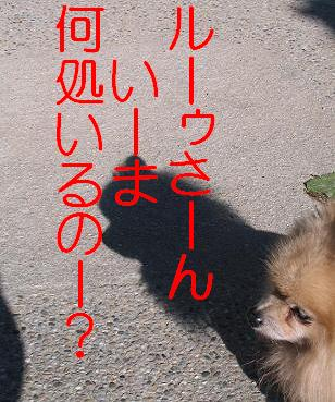 IMG_1141.jpg