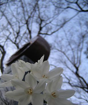 この花を空にいるユウへ