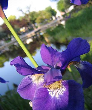 紫の花って~?