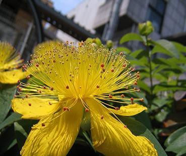 季節の花写真ー