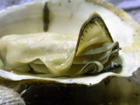 かまくら牡蠣アップ