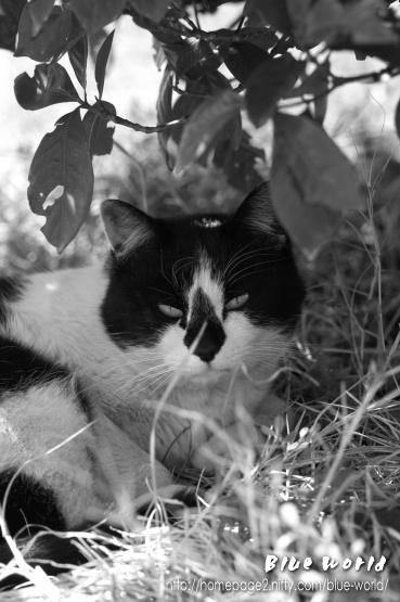 番外編:陸撮 ~ 木陰で休む猫