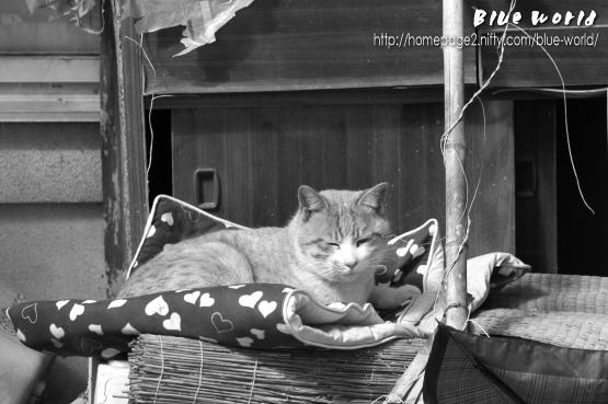 大家さん家の猫 ~ その2