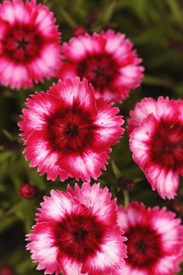 花 ~ flower