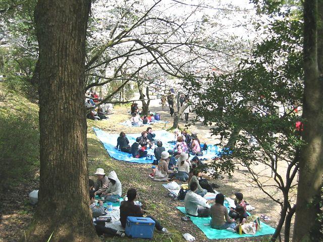 中間市垣生公園の桜花見