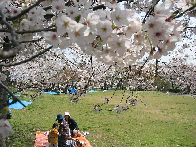 宮地岳神社の桜