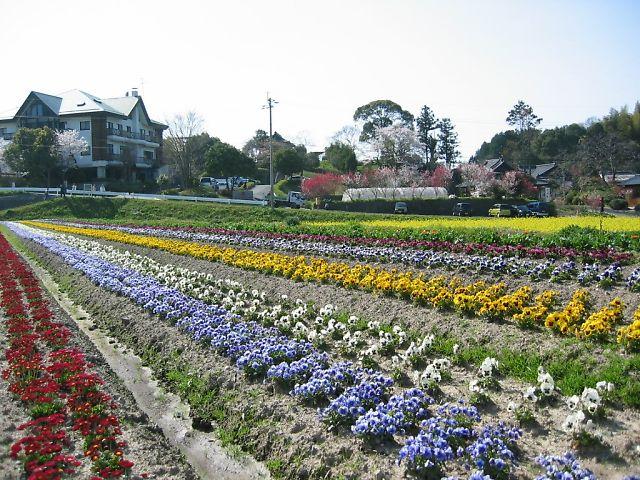 庄助ふる里村の春
